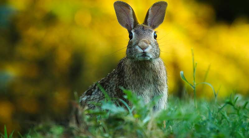 rabbit www,zoeharcombe.com